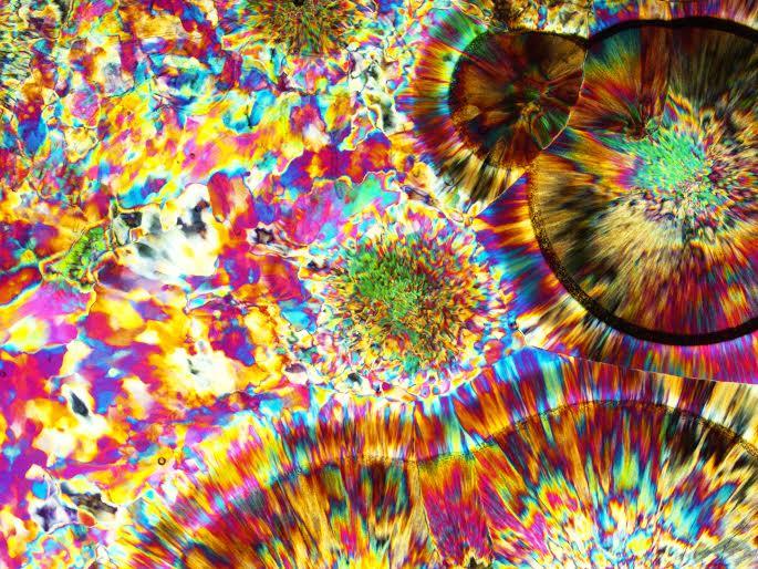 oj-microphotograph-leebills-02