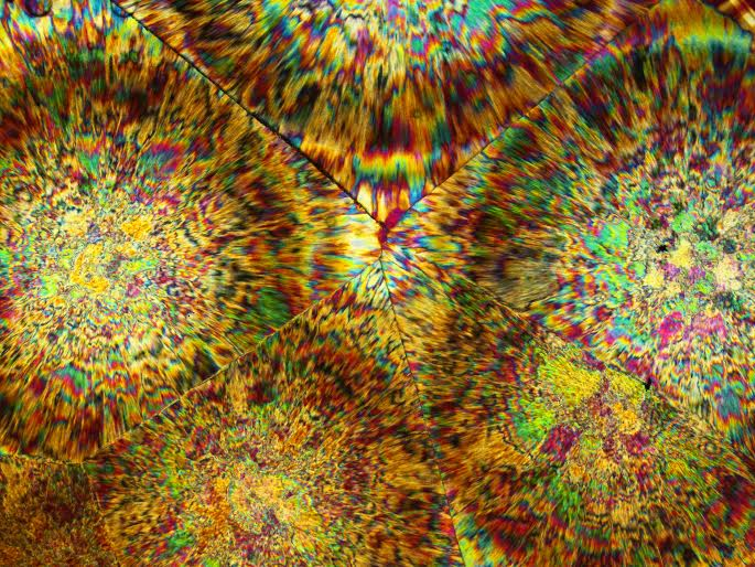 oj-microphotograph-leebills-03